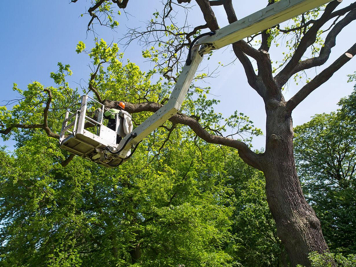poda de árboles con cesta elevadora