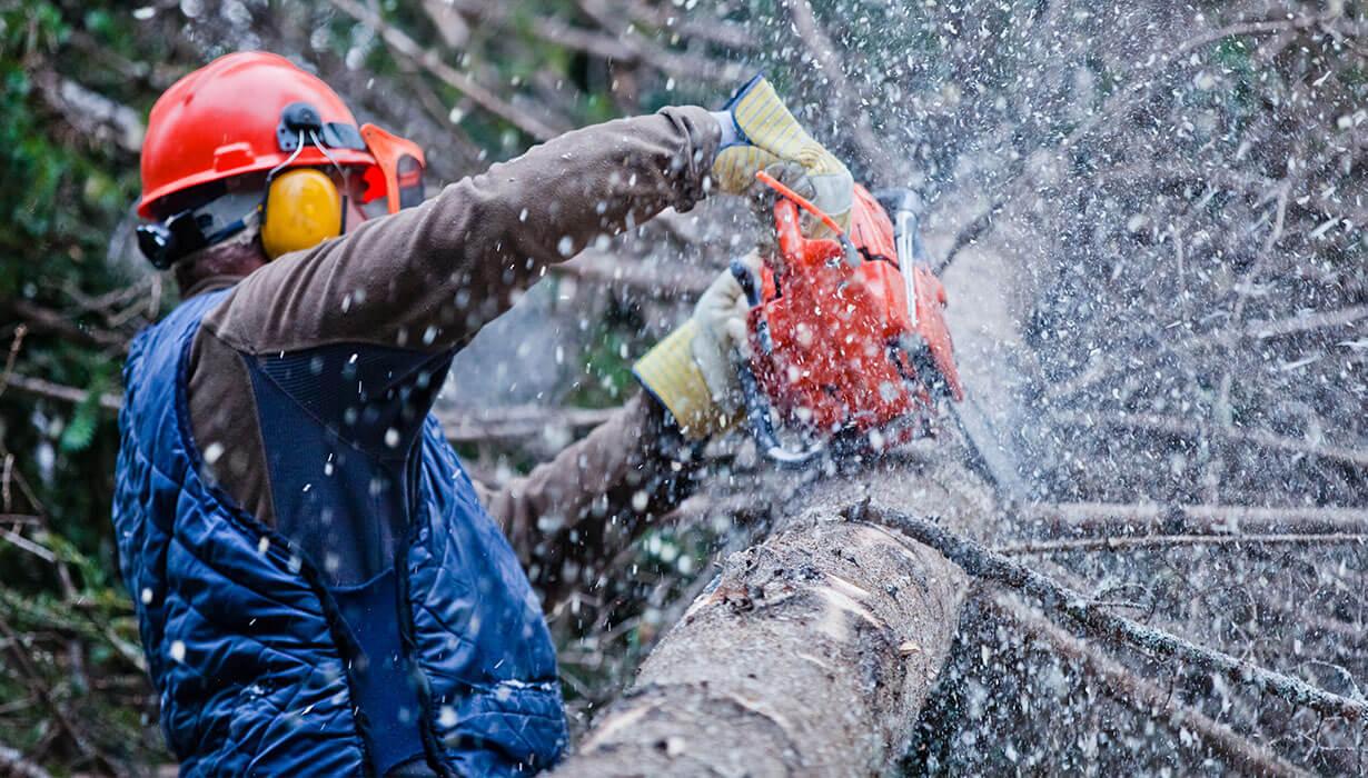 treball amb motoserra en un arbre