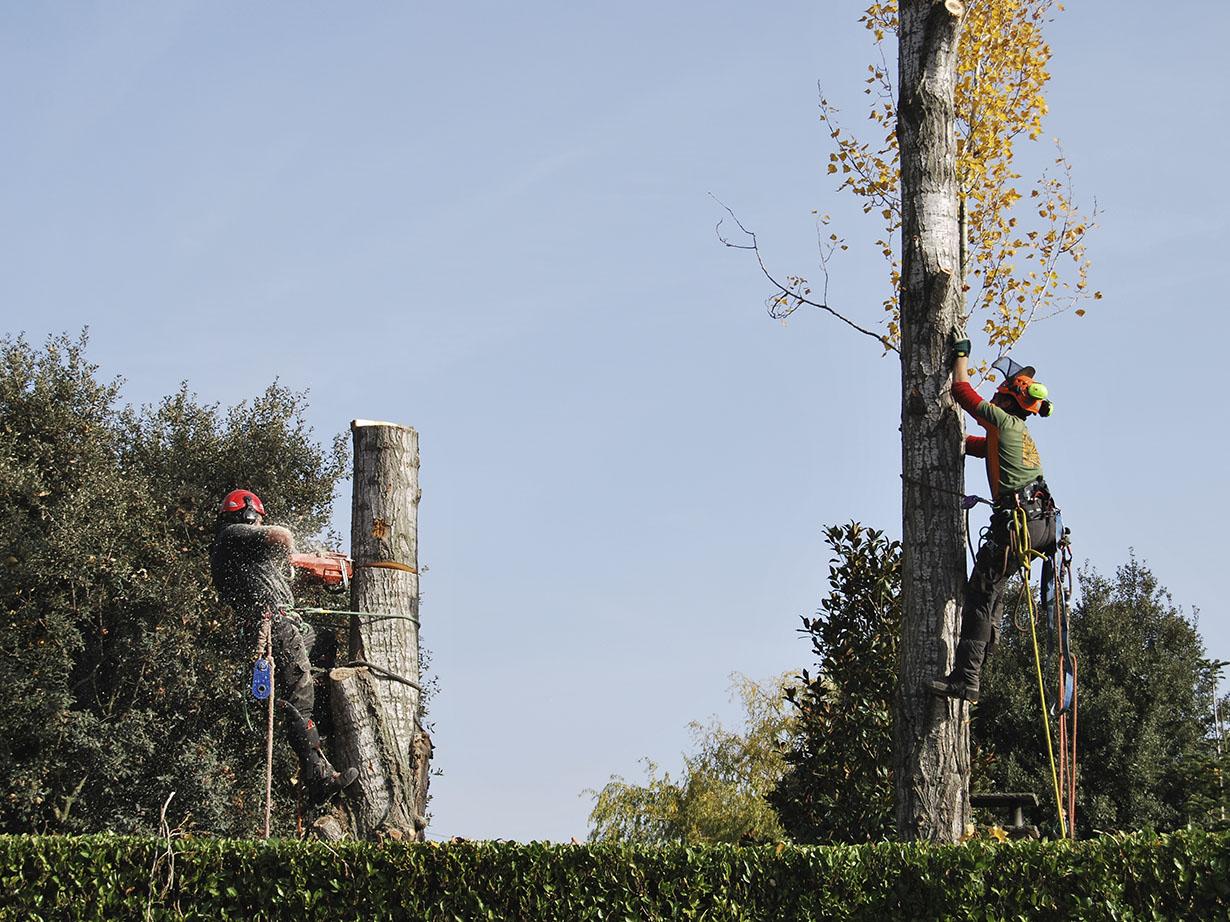 Tala arbres
