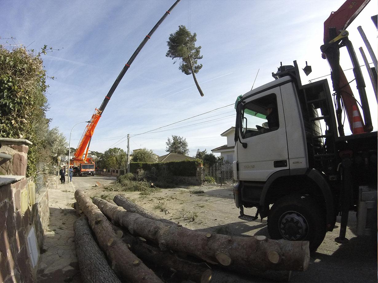 Tala de árboles grandes con grúa