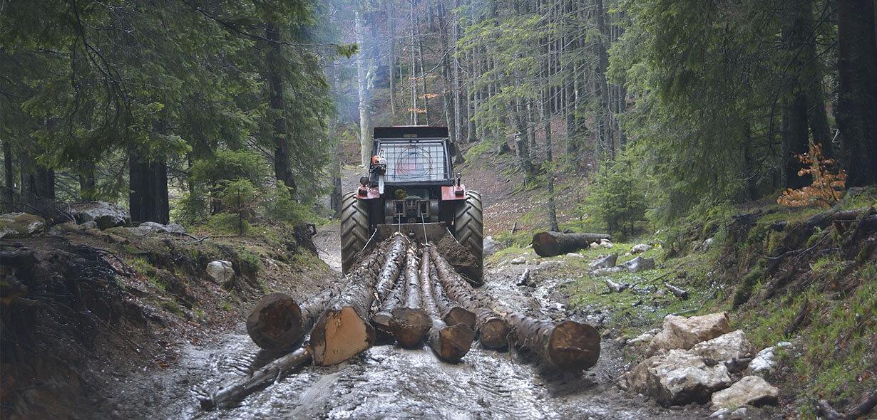 trabajo forestal de tala de árboles