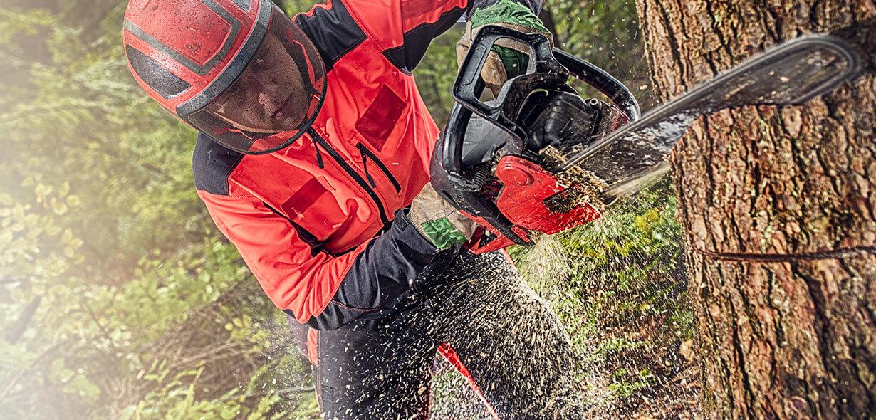 treballs forestals de tala d'arbres